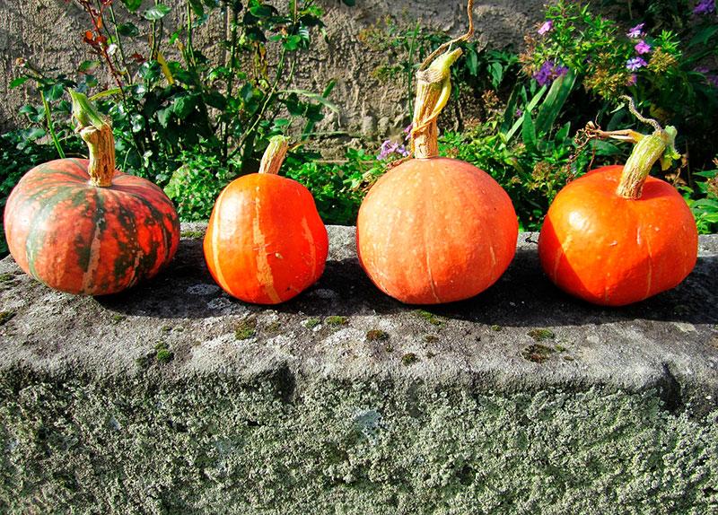 """Lección de tres periodos con el tema de """"verduras de otoño"""""""