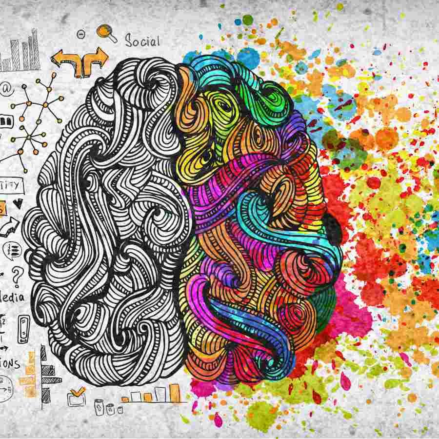 qué es a neurociencia educativa - cerebro